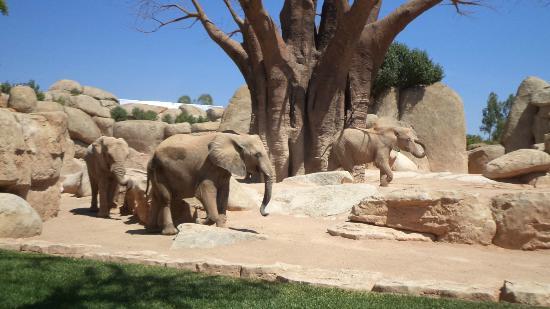 bioparc zoo in valencia spain