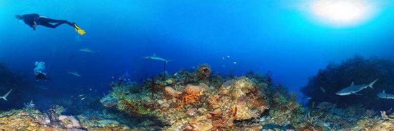 diving-pano