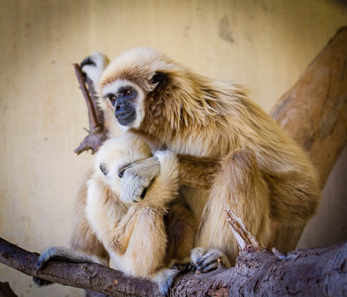 natura-monkey